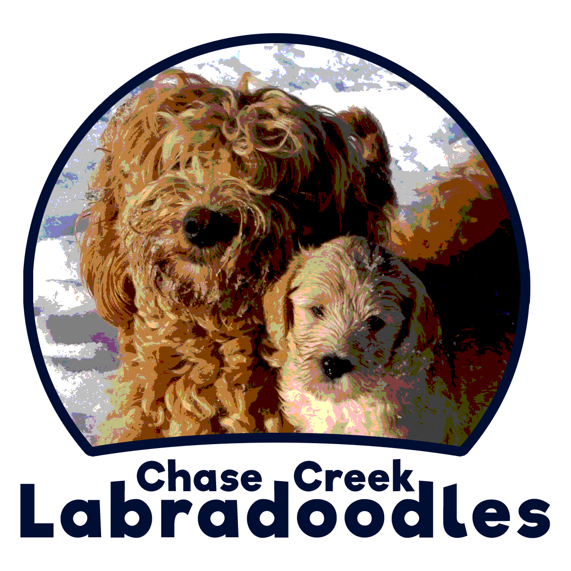 Chase Creek Labradoodles