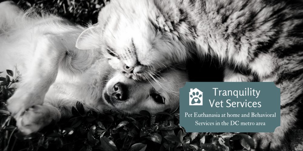 TranquilityVet Services (4).png