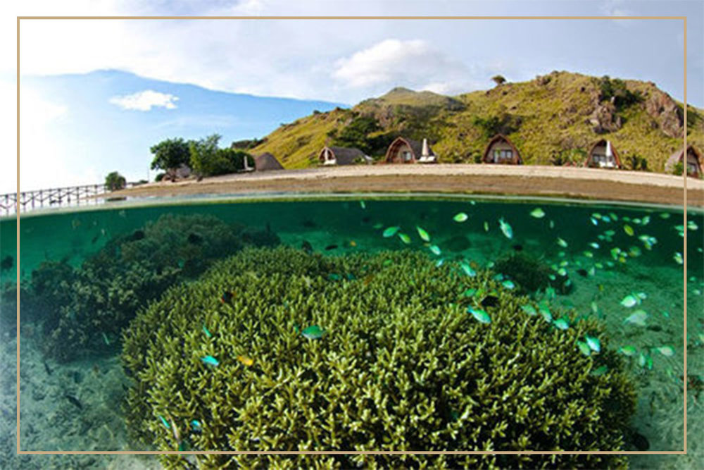 Sebayur Island-snorkeling