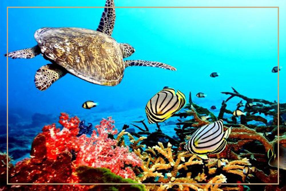 Siaba Kecil-turtles-sea