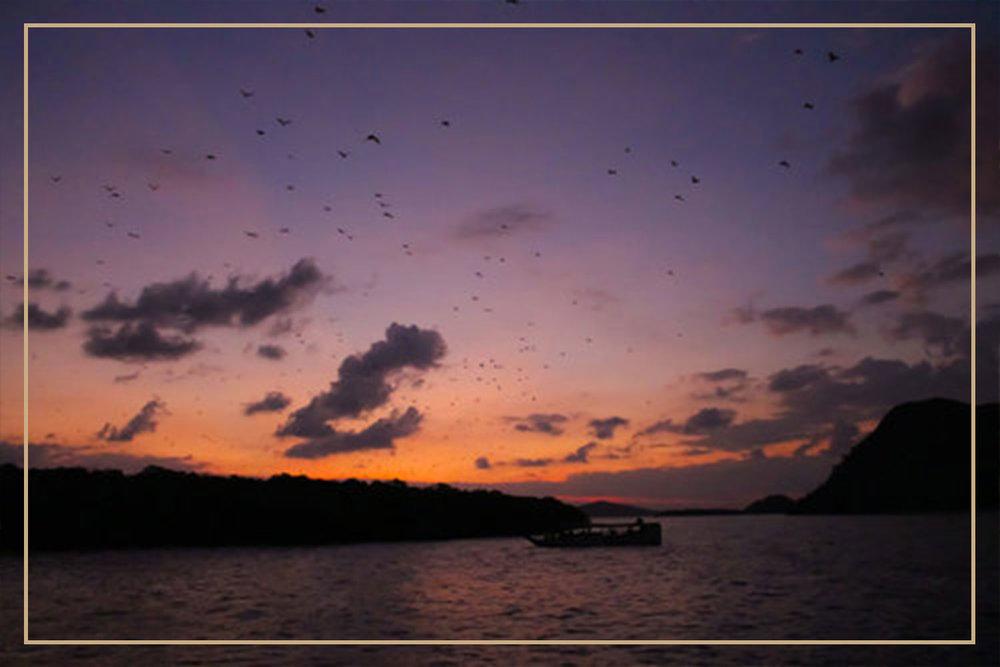 Horsehoe Bay- Bat-watching-Experience