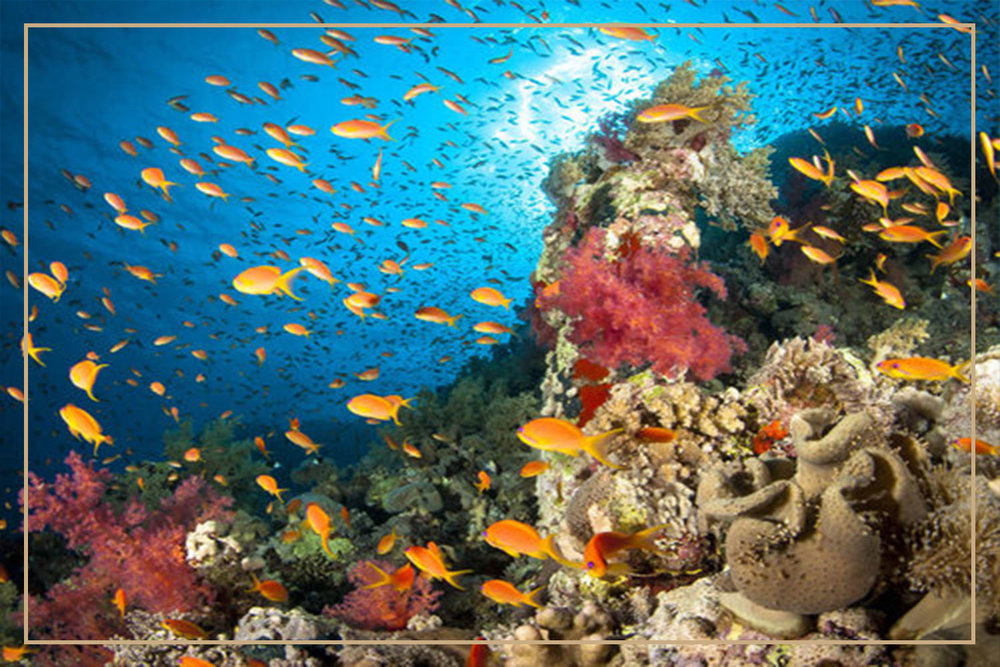 Batu-bolong-diving