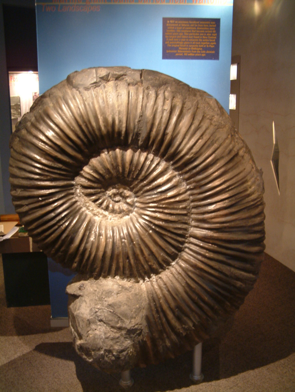 A giant replica of a fossilised ammonite found nearby in Taharoa in 1977