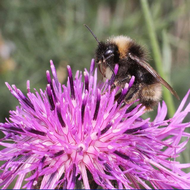 DIY - bees.jpg