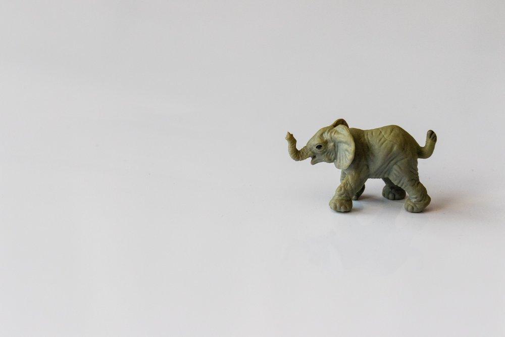 animal-art-baby-1289845.jpg
