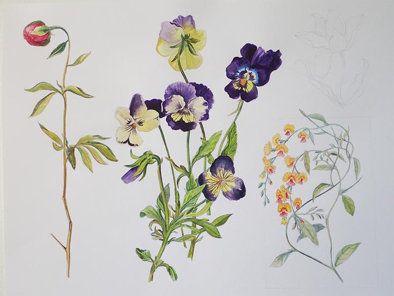 My first attempt at botanical drawings