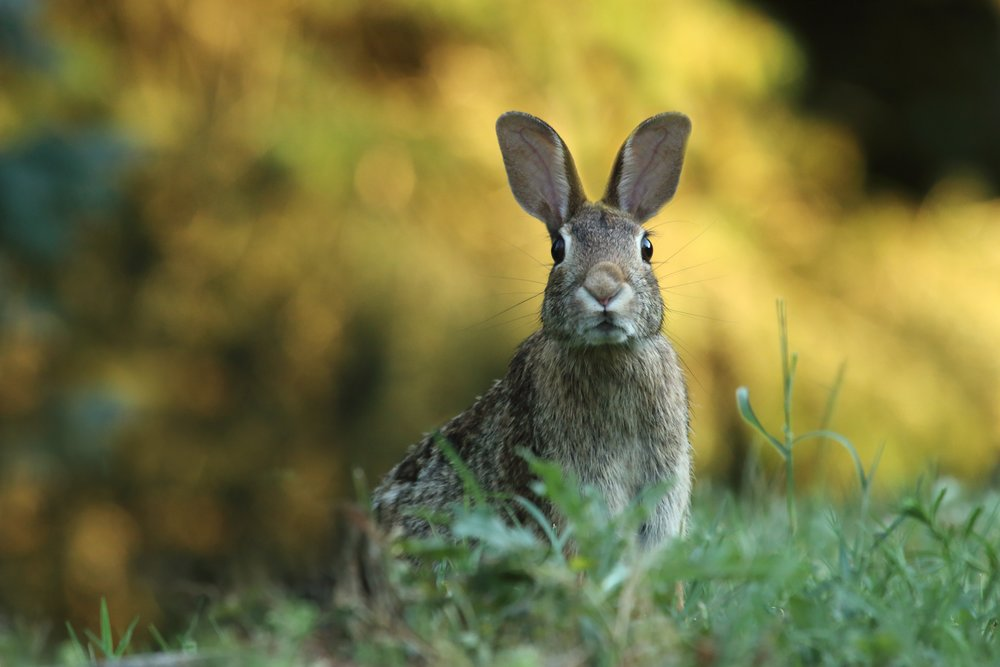 4 SUPERMARKETS TO PICK UP A CRUELTY FREE BEAUTY BARGAIN! - DISCOVER THEM HERE!