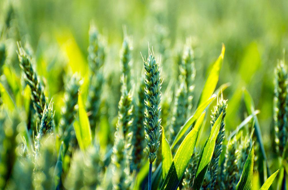 Bio und Fair - Wichtig ist, was jede und jeder Einzelne tut. Deshalb kaufen wir nach Möglichkeit ausschliesslich Bio-Knospe und Fairtrade zertifizierte Produkte.