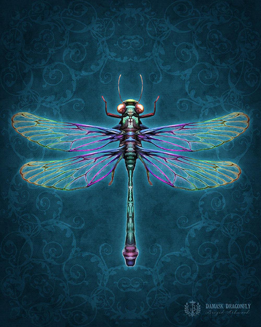 Damask Dragonfly