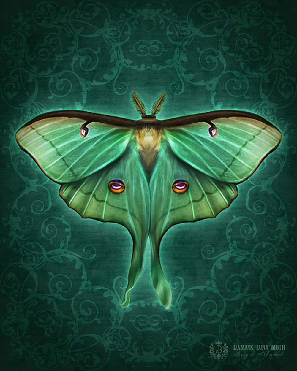 Damask Luna Moth