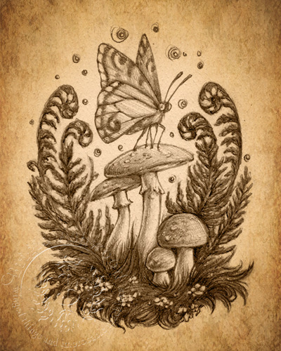 Evening Toadstools - Sepia