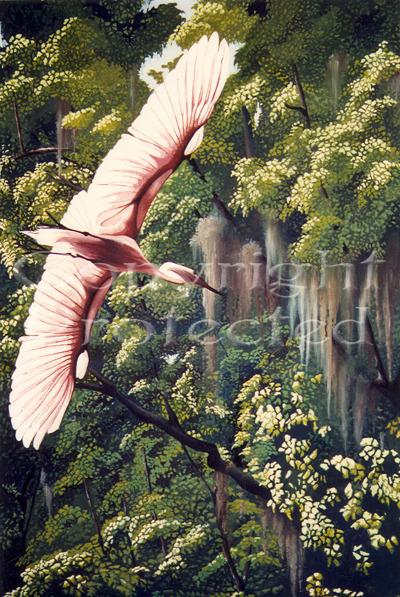 Everglades Flight