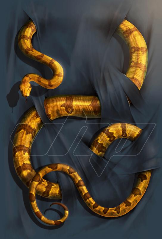 A-025 Boa Constrictor canvas.jpg