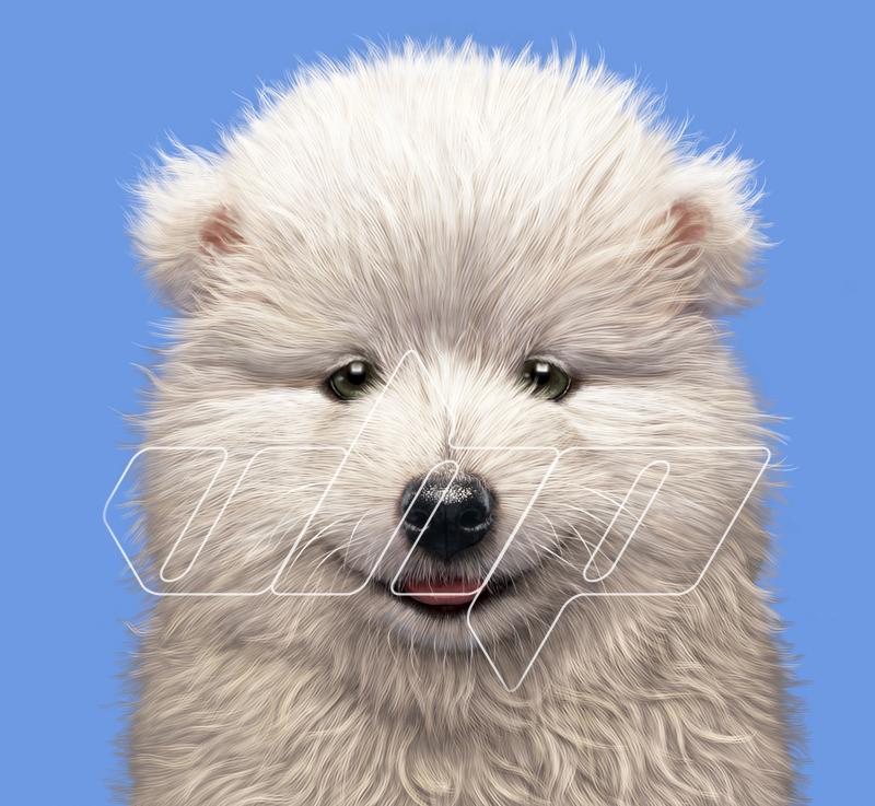 A-027 Samoyed Puppy Portroait.jpg