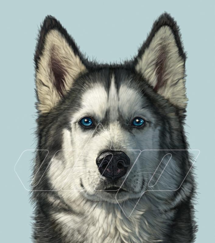 A-031 Husky Portrait.jpg