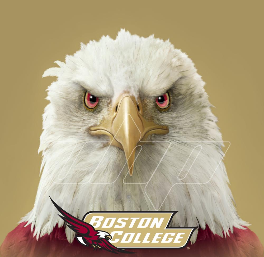 Boston College Eagle Head.jpg