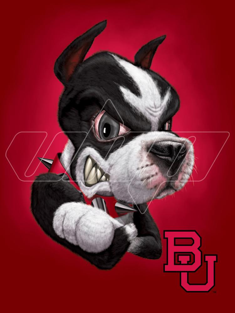 Boston University Terrier.jpg