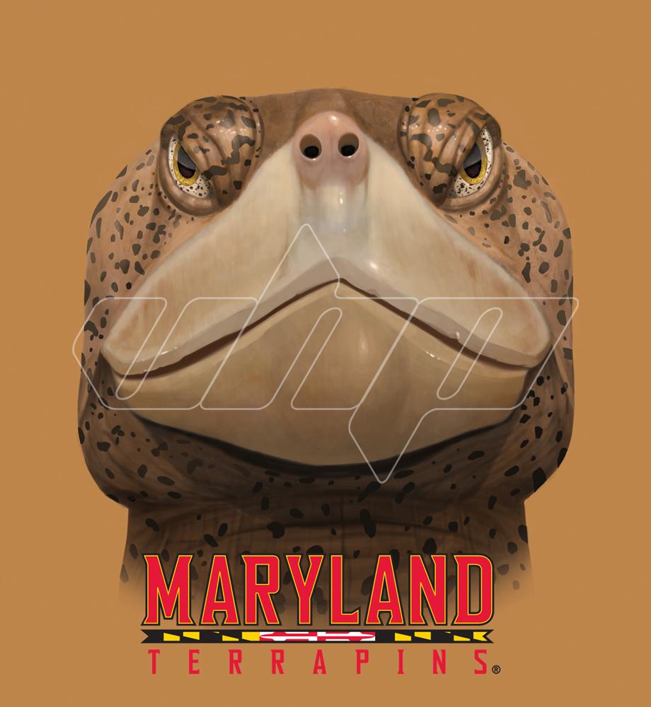 Maryland terrapins head.jpg