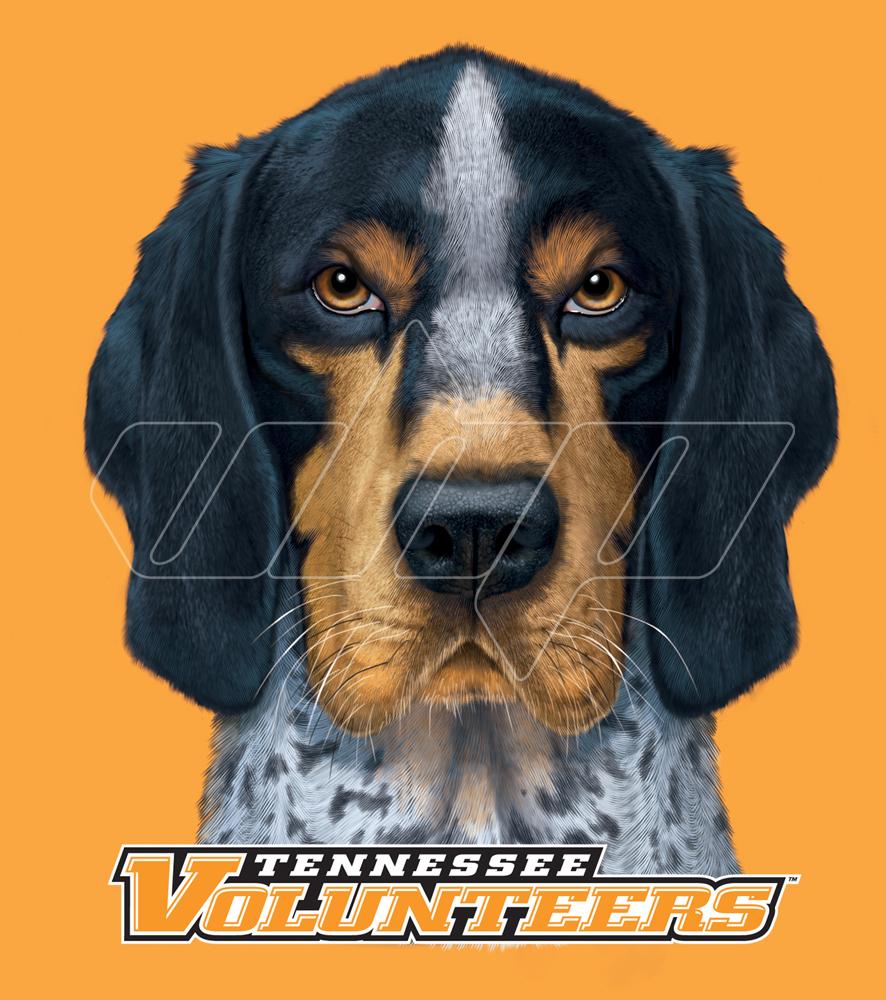 University of Tennessee Bluetick Coonhound.jpg