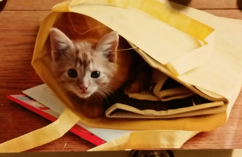 Cute and sweet!Meet Fifi!