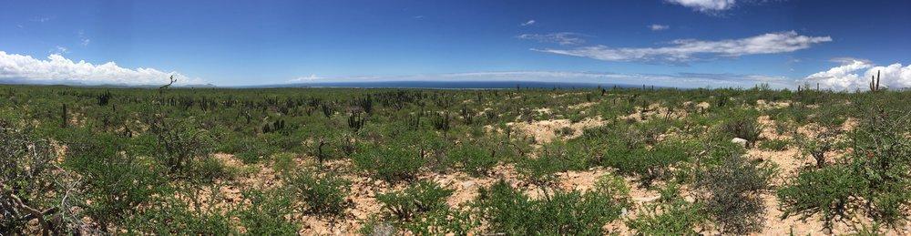 Panorama_Taller de Terreno_Desertico verde.jpg