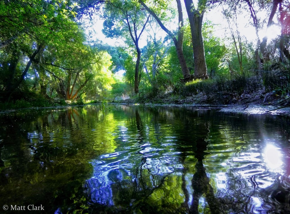 Cienega_Creek_Natural_Preserve_photo_credit_Matt_Clark_web_small.jpg