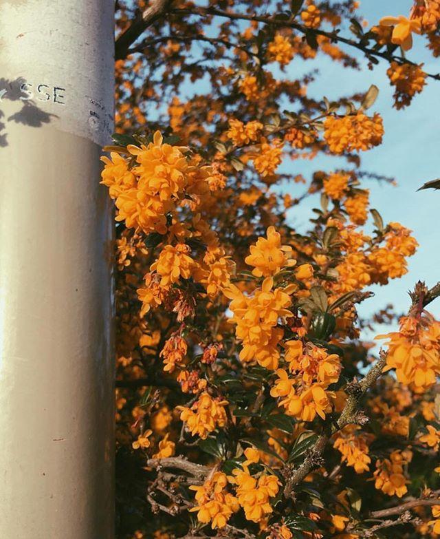 #35mm love.