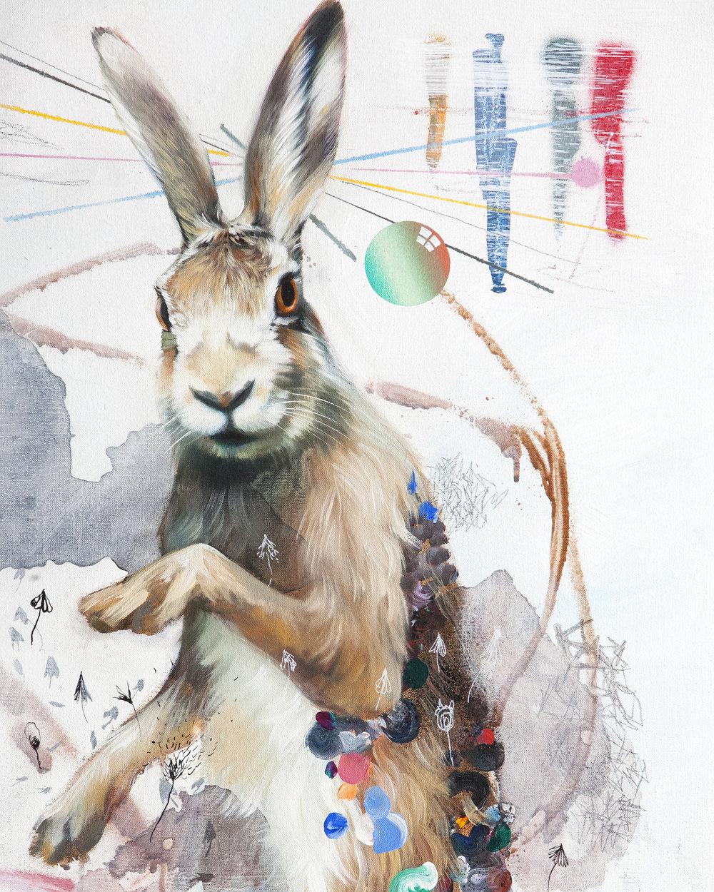 c_sa_rabbit2.jpg