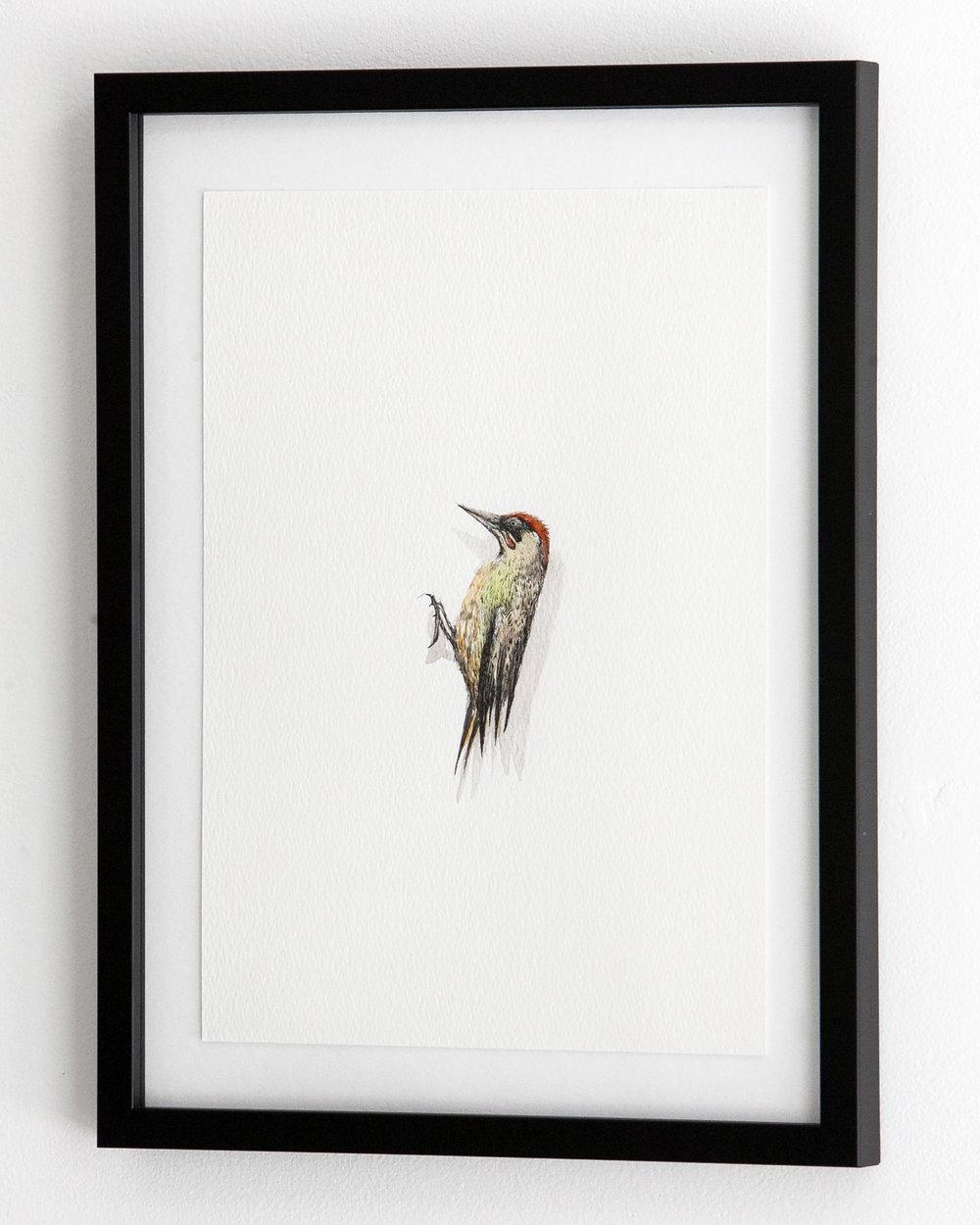c_bird_7_2.jpg