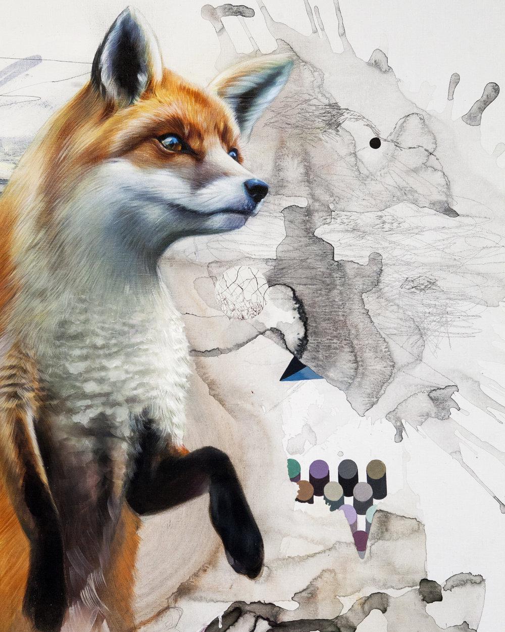 c_sa_fox2.jpg