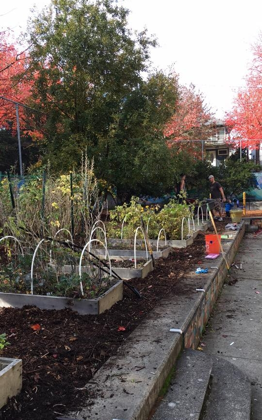 Our Garden - Madrona has a beautiful garden space on the south side of the building. Teachers often make time to explore the garden with their classes. Madrona's Green Team hosts garden maintenance parties in the Fall and Spring to bring our community together to take care of the garden.