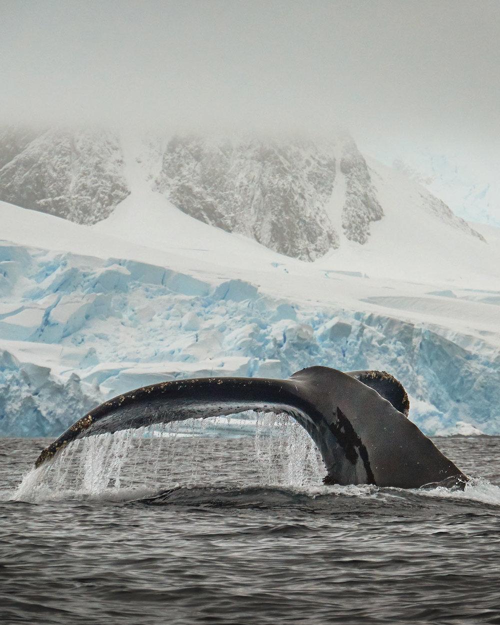 antarctica-3.jpg