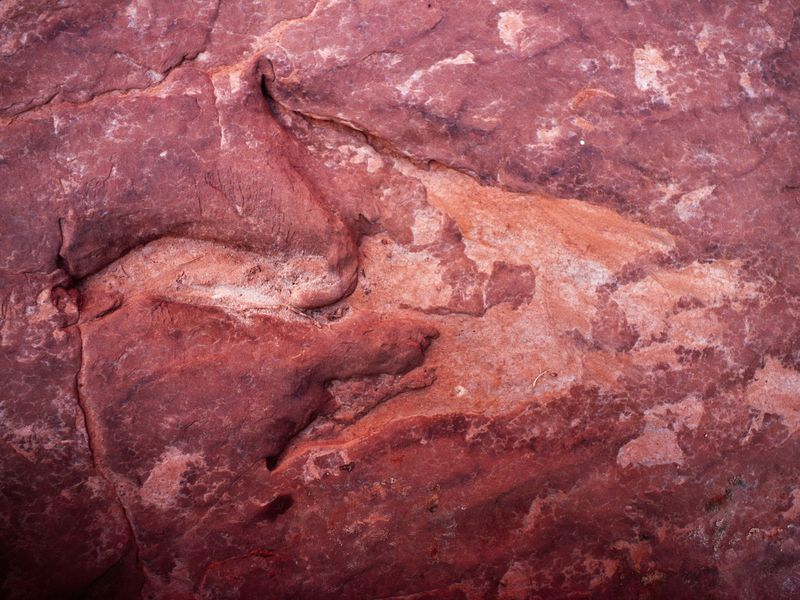 This dinosaur footprint was found in sandstone at Dinosaur Track at Hackberry Canyon in Grand Staircase-Escalante National. A proclamation recently signed by President Trump would reduce the protected area by half.(RGB Ventures / SuperStock)