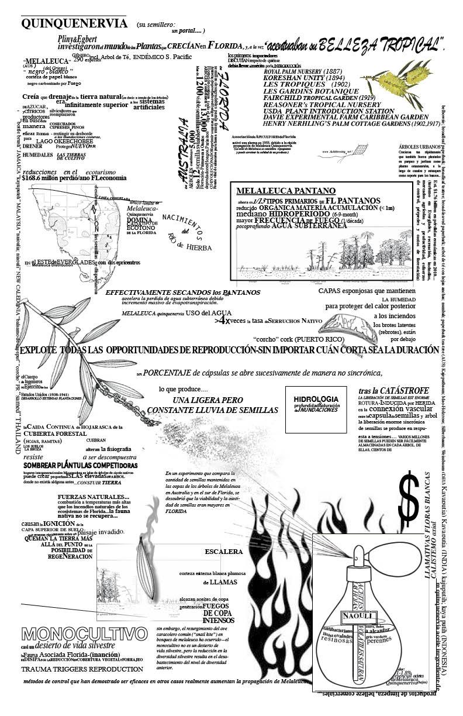 Melaleuca__11x17_spanish_90percent.jpg