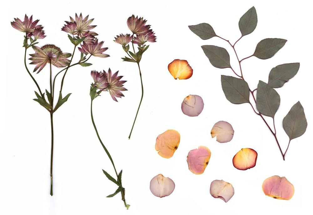 Pressed-Flowers.jpg