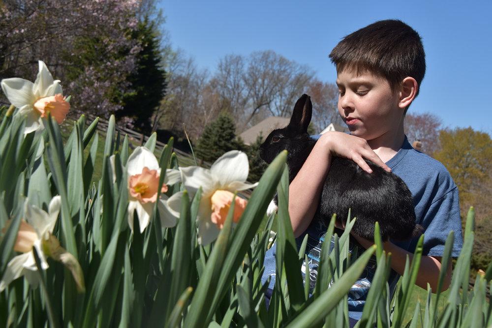 beckham-bunny.jpg