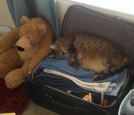 piggy-suitcase.jpg