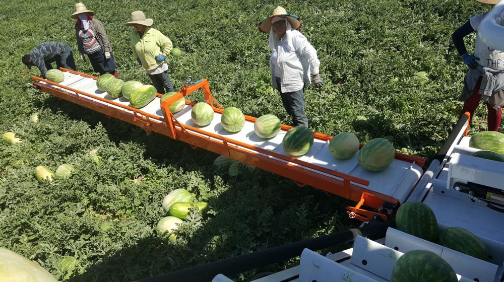 Melon Wrangler 35.png