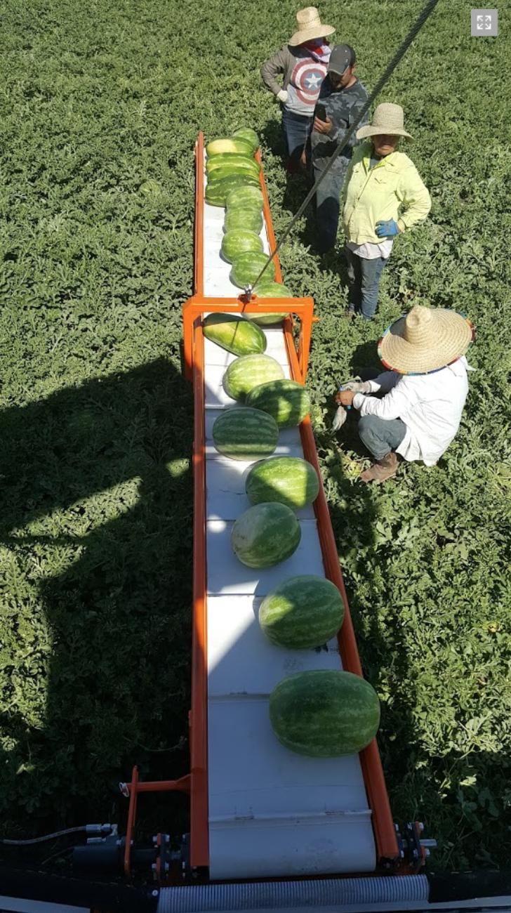 Melon Wrangler 36.png