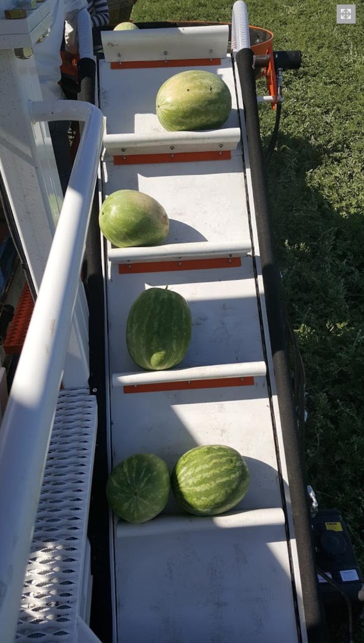 Melon Wrangler 37.png