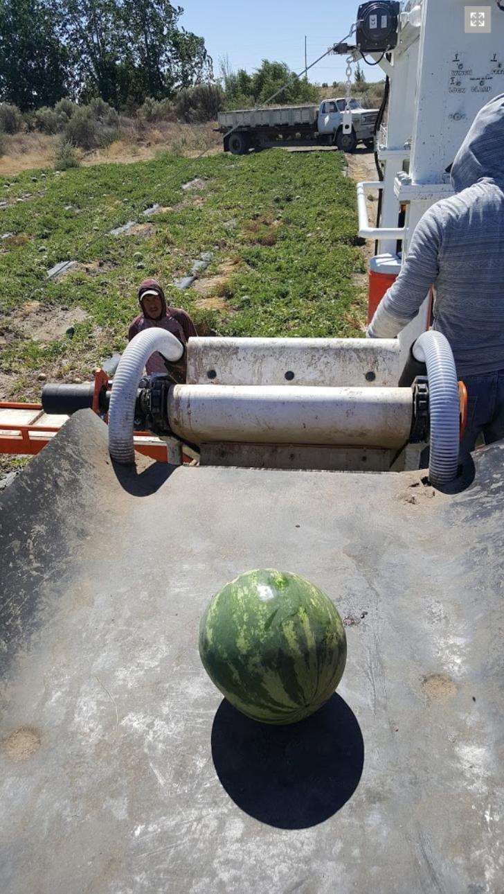 Melon Wrangler 41.png