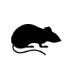 Ratty-sm.png