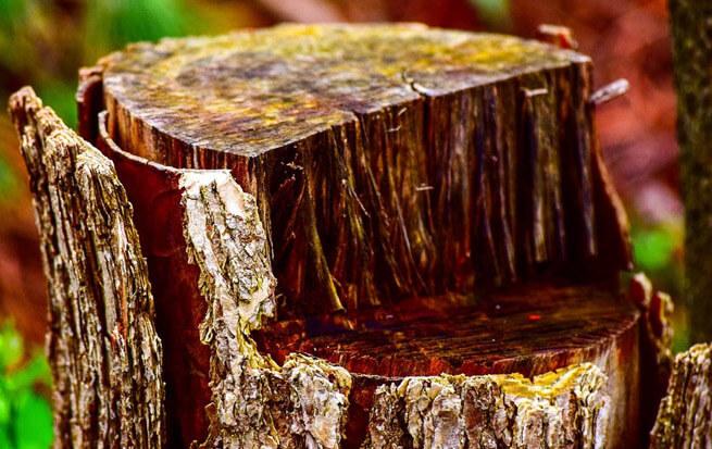 cut tree stump grinding.jpg