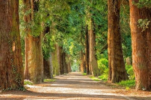 montecito tree service.jpg