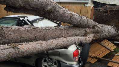 Emergency tree removal1.jpg