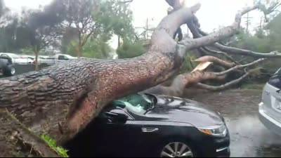 Emergency tree removal2.jpg