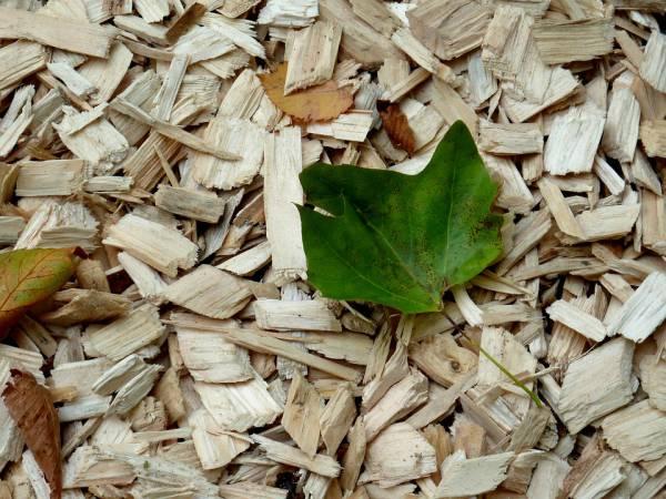 wood-chips.jpg