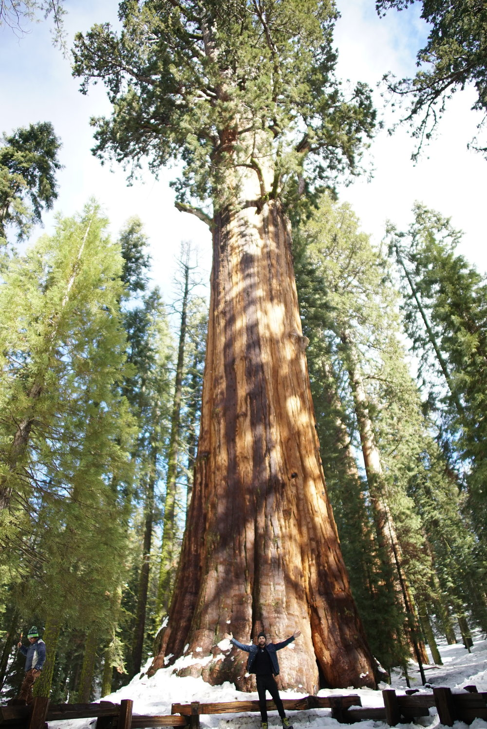 In front of the General Sherman Tree.