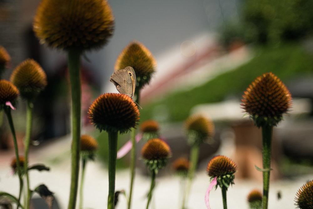 Nature-24.jpg