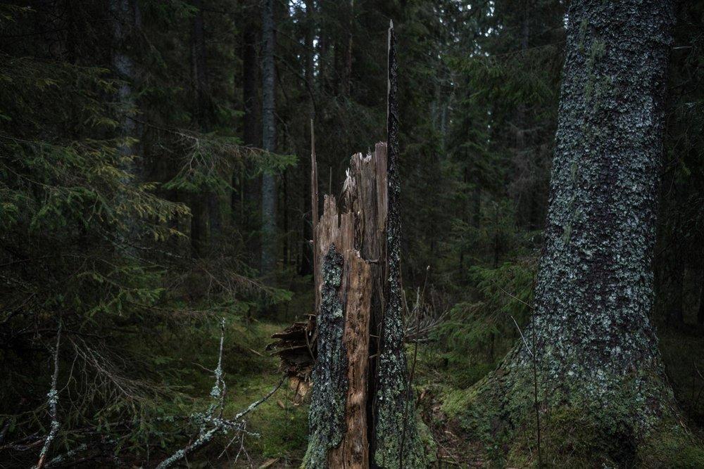 skuleskogen-6.jpg